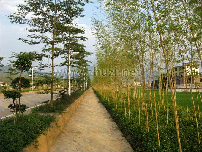 竹子园林手绘图